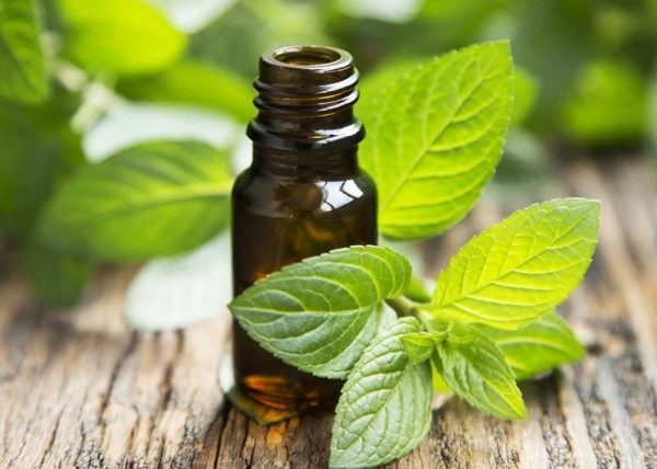 Peppermint Essential Oil (Mentha Arvensis) - OrganicViVi Therapy