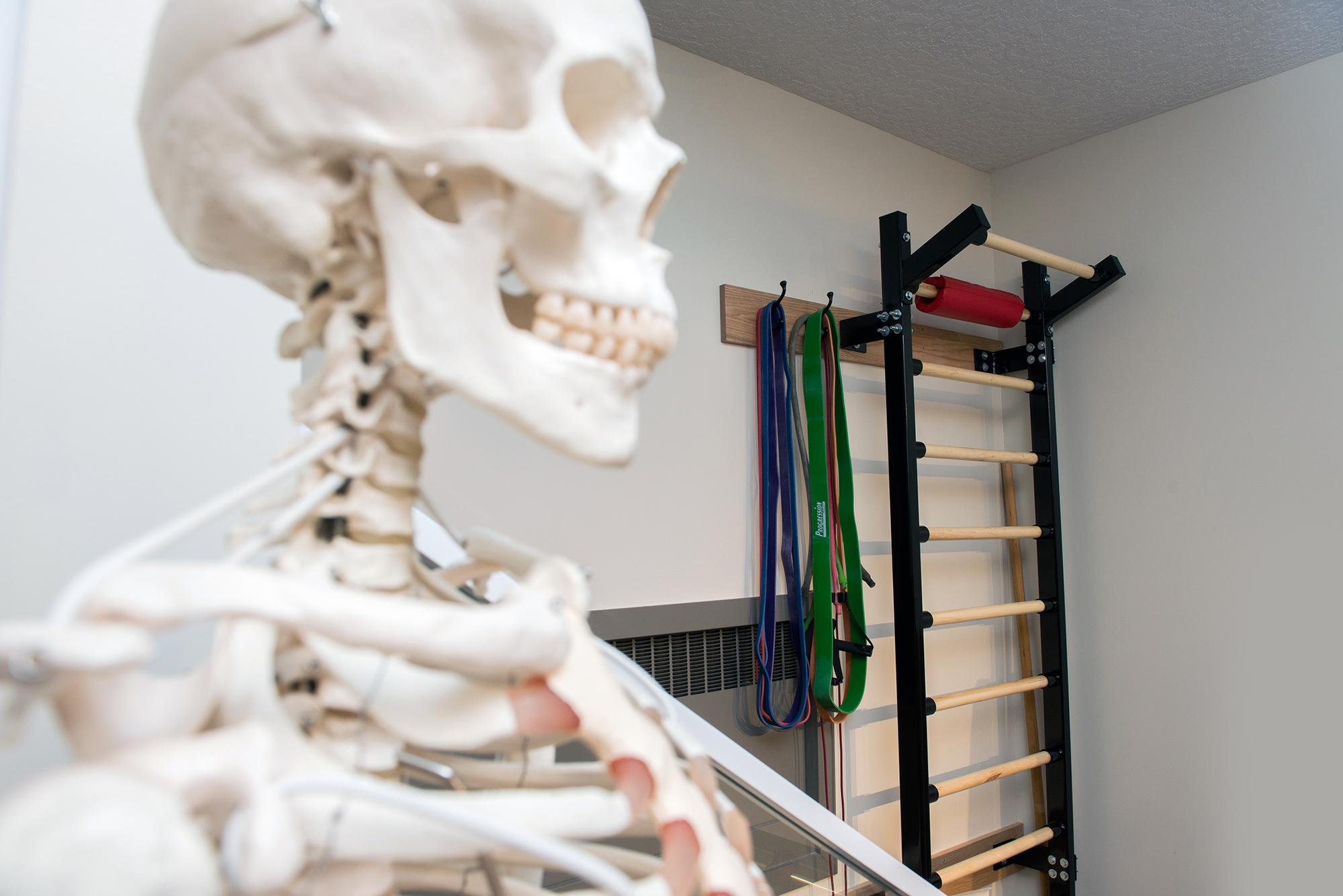 skeleton and gym